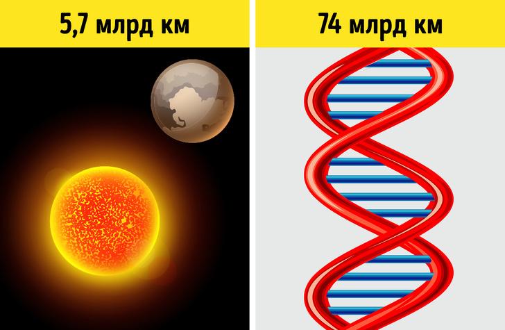 5 ненудних фактів про ДНК, які допоможуть зрозуміти, як влаштована жива природа