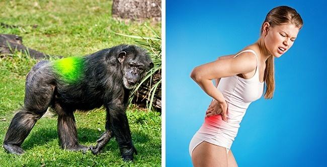 7 доказів того, що людина все ще еволюціонує