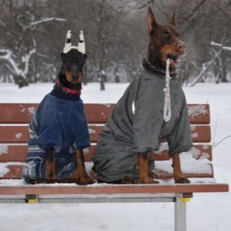 Прогулянка з собакою: коли і скільки разів на день можна гуляти з щеням? Як правильно вигулювати собак? Чи потрібно мити лапи після прогулянки?